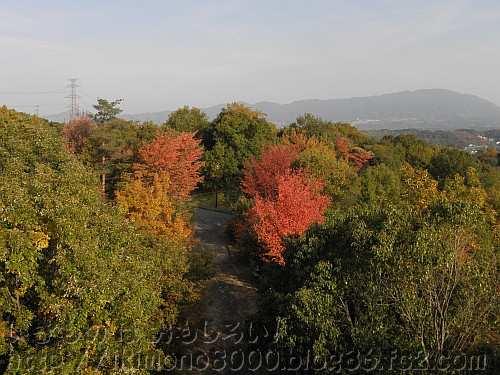 展望台から見たヤマザクラの紅葉と大和葛城山
