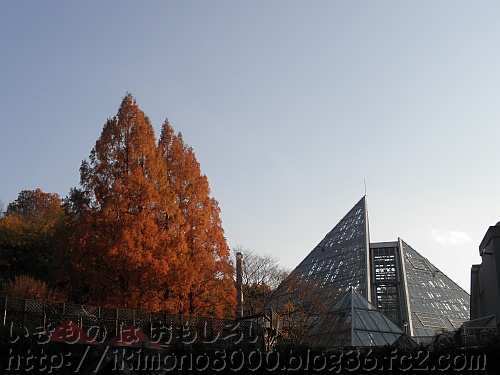 花の文化園の褐葉しているメタセコイアと大温室