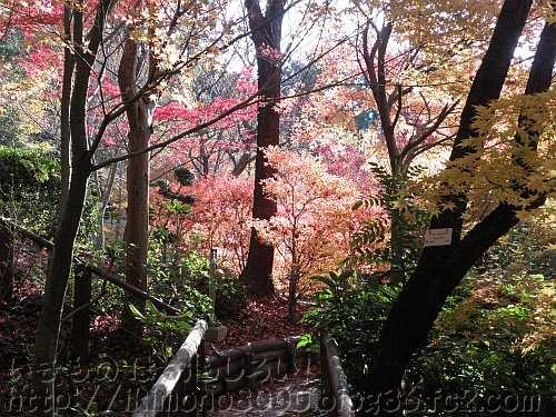 モミジ谷の中から見た紅葉