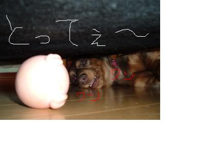 snap_ilovehana2010_20111614485.jpg