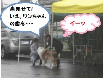 10-10-31-5_20101102010623.jpg