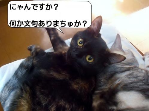 20121011_204047.jpg