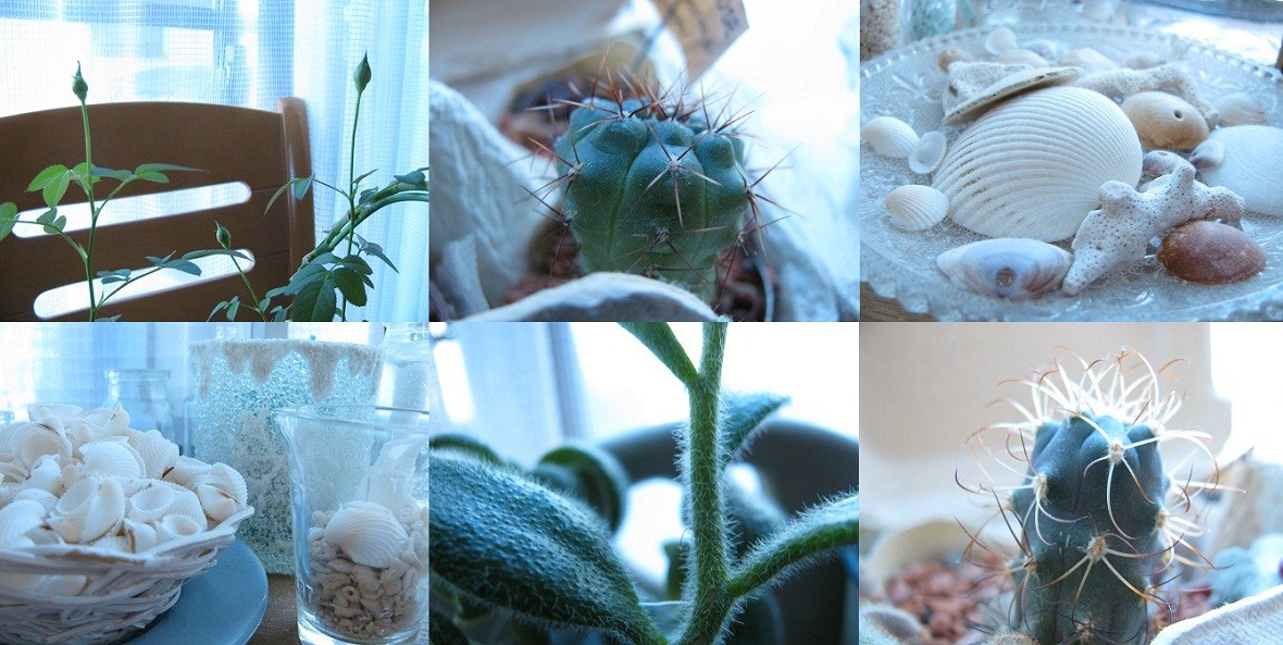 _部屋の中の植物