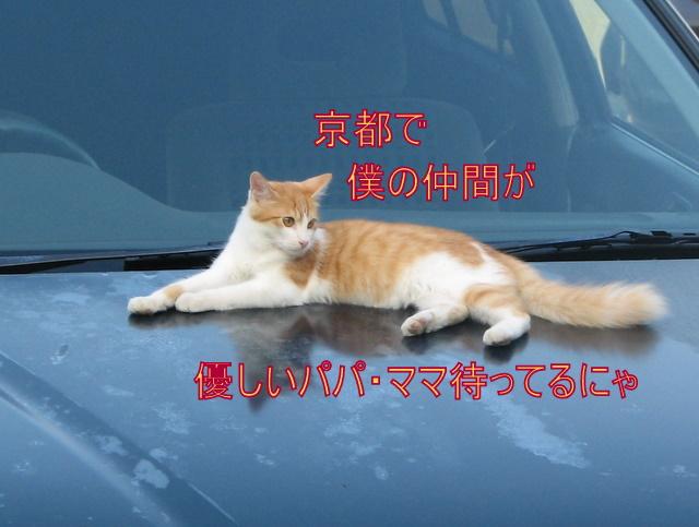 IMG_4884.jpg