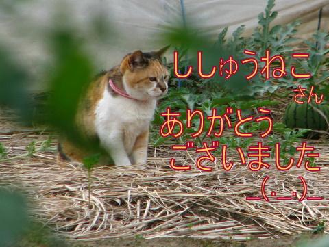 IMG_7467-1.jpg