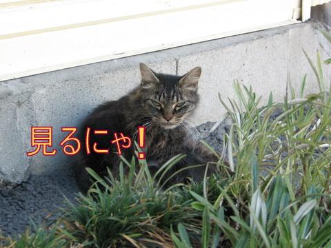 IMG_7838.jpg