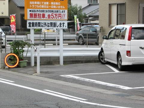 IMG_8075-1.jpg