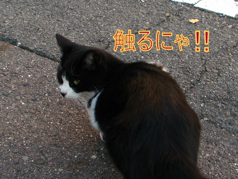 IMG_8926-1.jpg