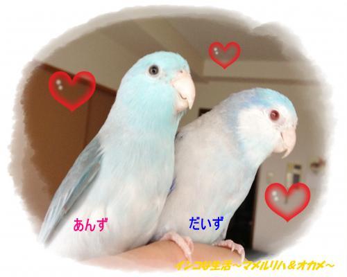 IMG_1351_convert_20120925102318.jpg