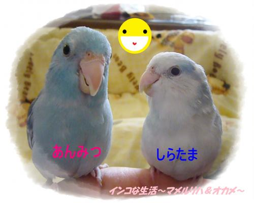 P1050396_convert_20121003201127.jpg