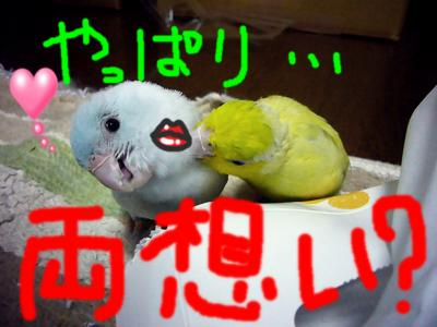 P1060165_convert_20120716231518.jpg