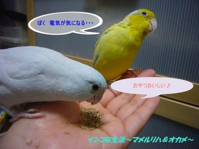 P1060177_convert_20120718220821.jpg