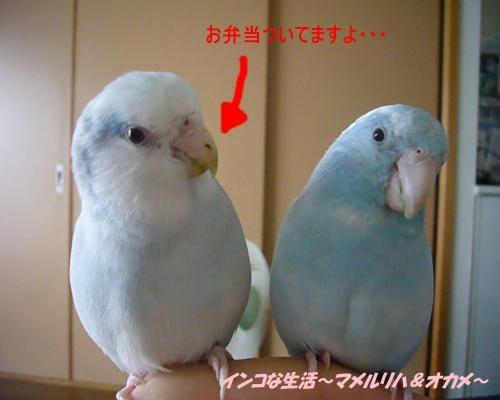 P1060320_convert_20120804224141.jpg