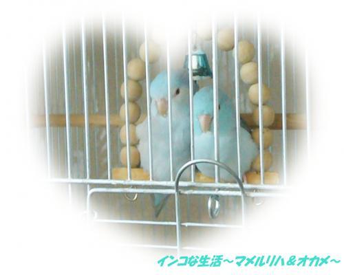P1060498_convert_20120901212053_20120901212228.jpg
