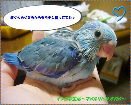 P1060869_convert_20121021104948.jpg