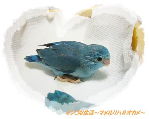P1060954_convert_20121026153458.jpg