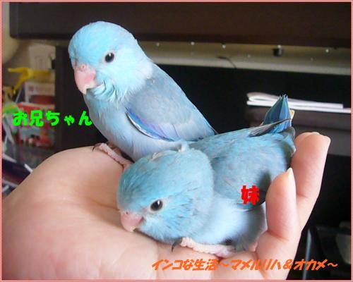 P1070026_convert_20121026152741.jpg