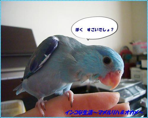 P1070035_convert_20121026152710.jpg