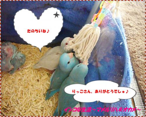 P1070133_convert_20121101121627.jpg