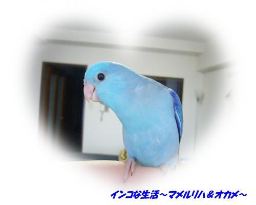 P1070237_convert_20121107164611.jpg