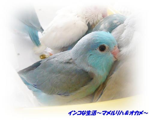 P1070270_convert_20121107165202.jpg