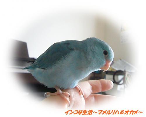 P1070277_convert_20121114212237.jpg