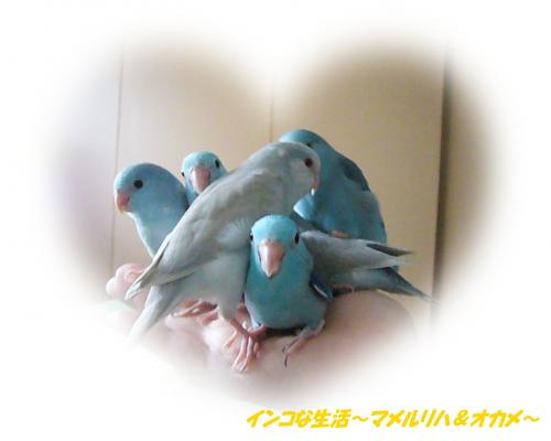 P1070315_convert_20121114212517.jpg