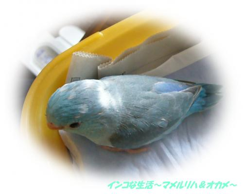 P1070330_convert_20121114212653.jpg