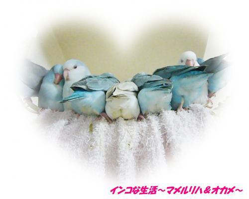 P1070409_convert_20121124201631.jpg