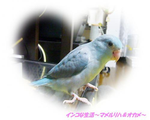P1070575_convert_20121124205932.jpg
