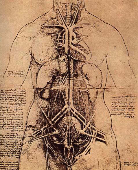 Da-Vinci_Anatomy_Study.jpg
