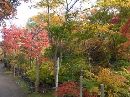 きれぎれの風採 「小林槭樹園」1-1
