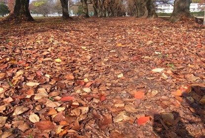 きれぎれの風採 「落ち葉」1-2