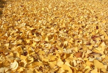 きれぎれの風採 「落ち葉」1-3