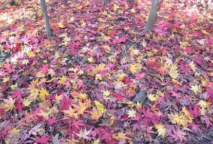 きれぎれの風採 「落ち葉」1-4