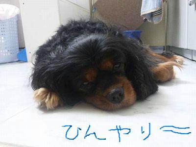 snap_inukoba_20125212515.jpg