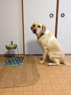 ランディー4歳の誕生日