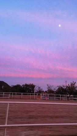 黄昏る馬場