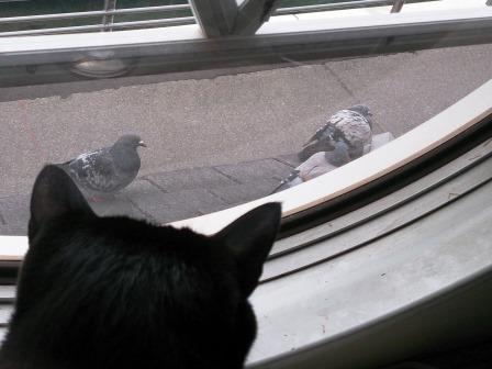 ミー太と鳩