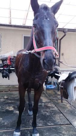 トリトン 犬より犬らしい馬