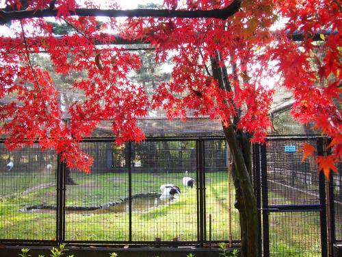 紅葉 後楽園2