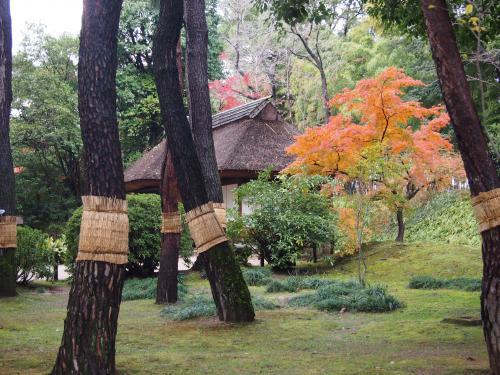 紅葉... 後楽園4