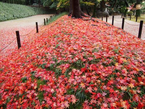 紅葉...後楽園10