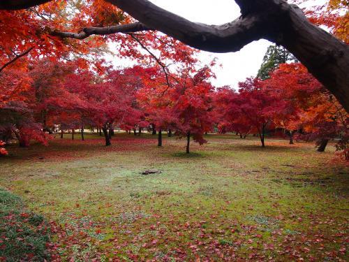 紅葉...後楽園7
