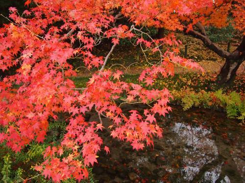 紅葉... 後楽園5