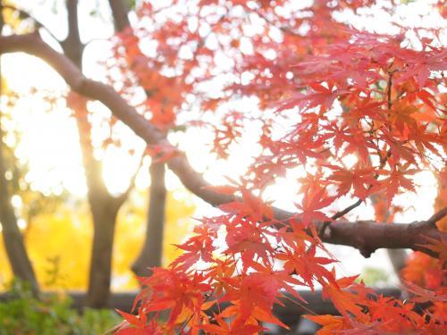 紅葉... 岡山城2