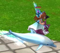 イルカの上を走る(意味がないペット…