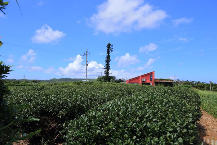 山城紅茶 CHA EN2
