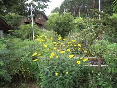 黄色野花2
