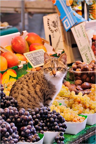 fruits-cat01.jpg